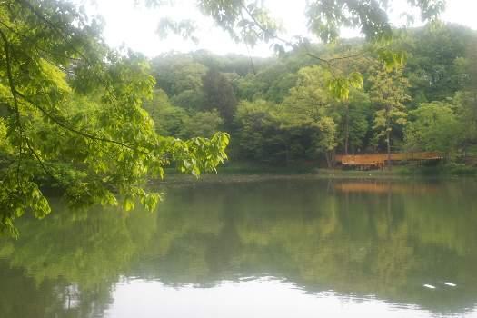 多摩湖の近くの池