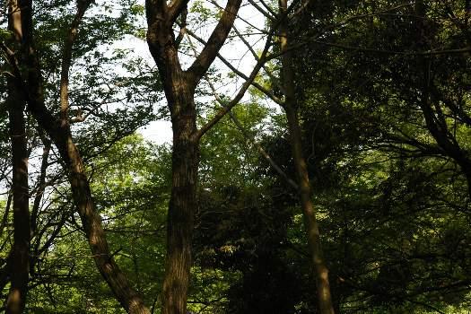 国分寺の森2