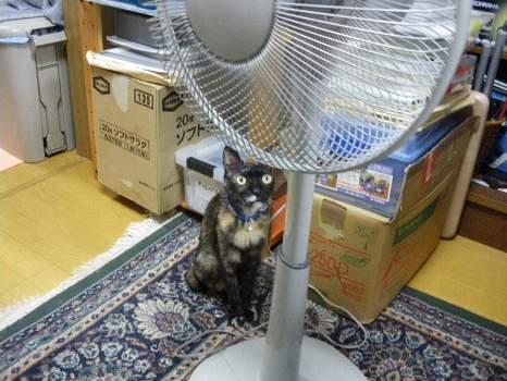 扇風機を避けるアビ