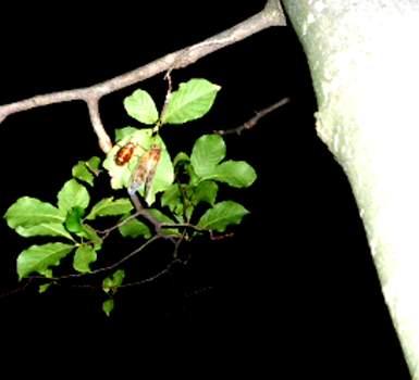 蝉のさなぎと羽化2jpg
