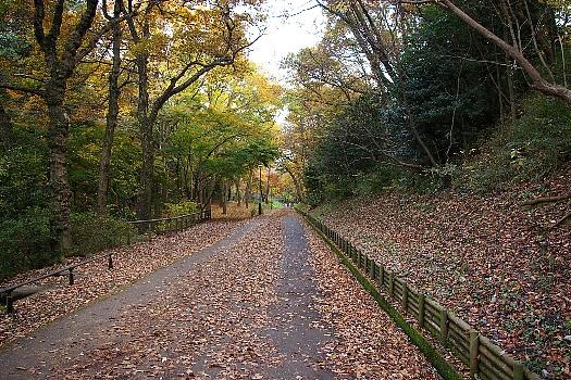 狭山公園の道