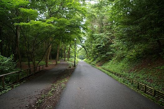 狭山公園の道夏