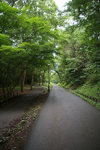 狭山公園の道夏縦