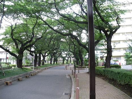葉桜の並木道