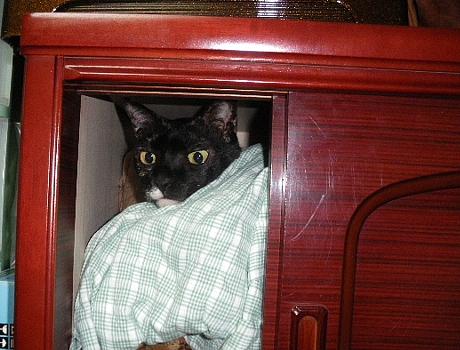 戸棚の中のアビ