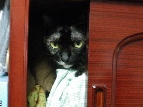 戸棚の中のアビ2