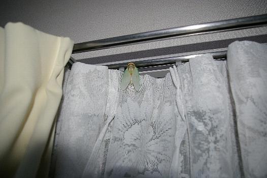 羽化直後の蝉2