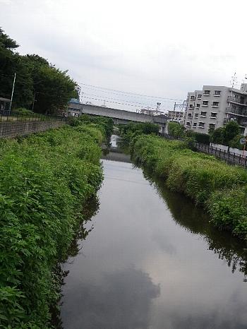 空堀川の夏