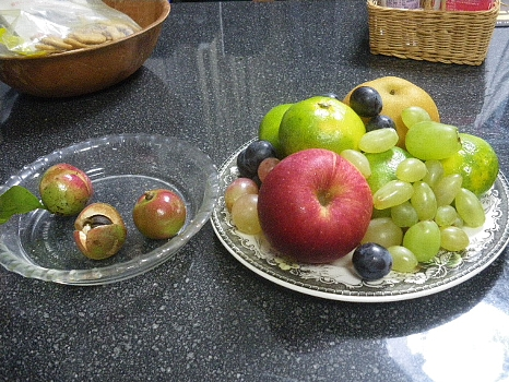 秋の果物とはじけた椿の実