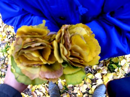 2009.11.29.イチョウ花束くれる015 のコピー