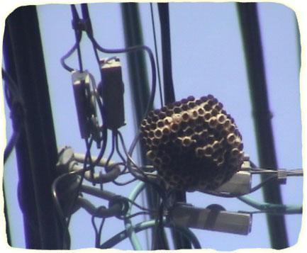 2010.9.6.足長蜂の巣dsc のコピー 320x