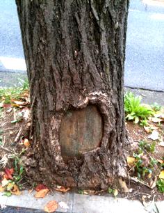 2010.11.14.●木のドアかな のコピー