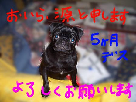 2006.2.26撮影(P)001