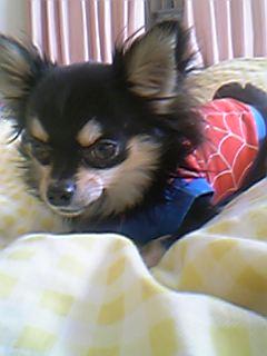 スパイダーマンボビー