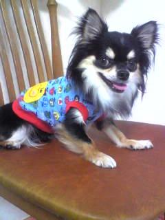 リリ二歳記念ボビー