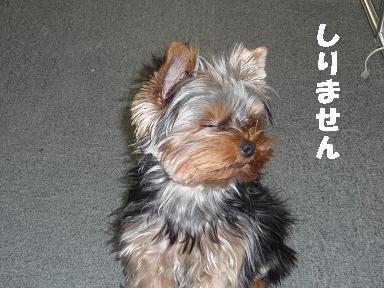 コピー ~ 2008_1118 元の写真0040