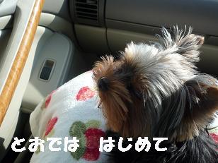 コピー ~ 2008_1123 元の写真0023