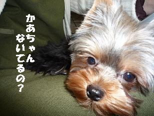 コピー ~ 2008_1229 デジカメ写真0014