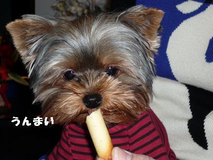 コピー ~ 2009_0116 デジカメ写真0017