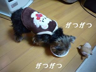 2009_0119 デジカメ写真0037
