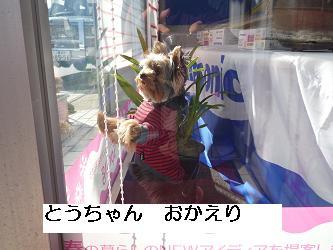 コピー ~ P1010254