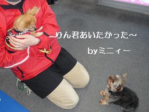 コピー ~ 2009_0223 デジカメ写真0088
