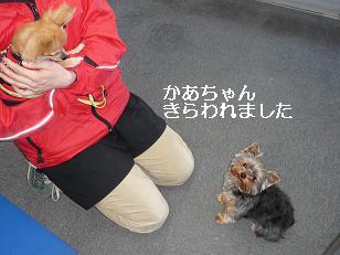 コピー ~ 2009_0223 デジカメ写真0087