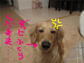 CAEGXQ0H_convert_20090215073151a.jpg