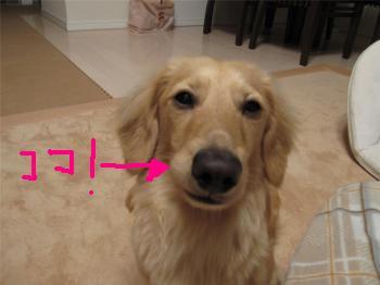CAEUJJ8E_convert_20090215073255a.jpg
