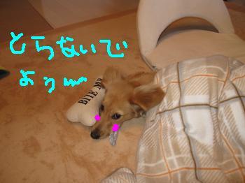 IMG_0233_convert_20090201094656a.jpg