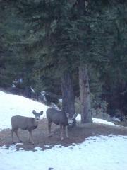 Banff 2010 Feb 3