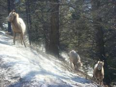 Banff 2010 Feb 9