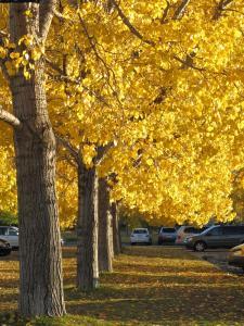 Glenmore Park? Autumn 2010_4