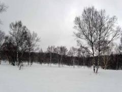 冬の三合平