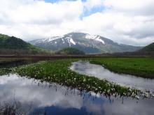下の大堀川と残雪の至仏山