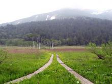 見本園からの至仏山