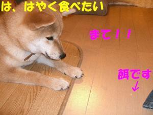 CIMG3346.jpg
