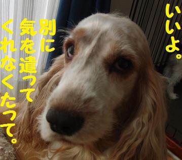 CIMG3287.jpg
