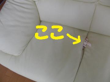 CIMG6013.jpg
