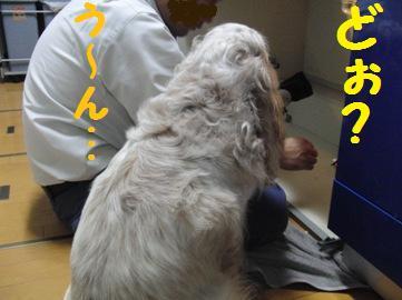 CIMG7324.jpg