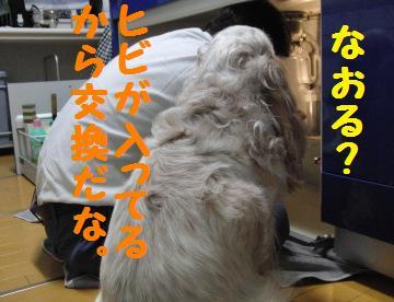 CIMG7327.jpg