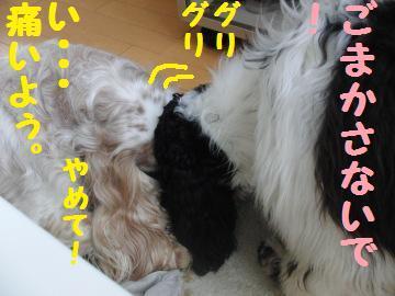 CIMG7442.jpg