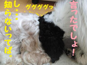 CIMG7443.jpg