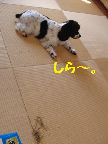 CIMG7842.jpg