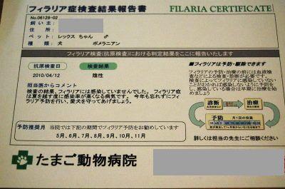 れっくすフィラリア症検査結果