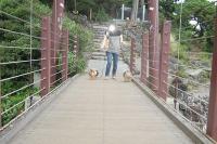 つり橋渡る