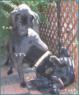 2006.10黒団子1