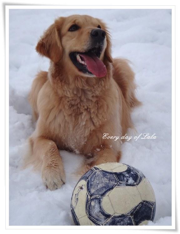 サッカーボールとララD