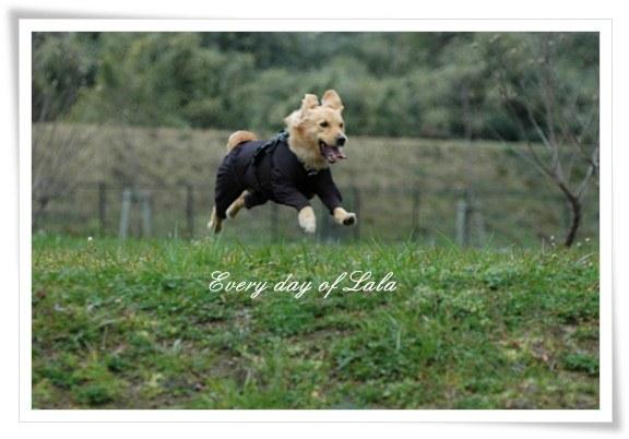 失敗飛行犬