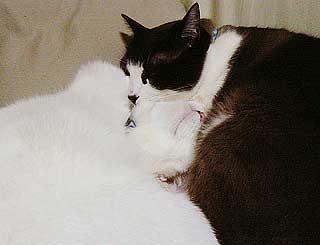 猫団子の悩み02